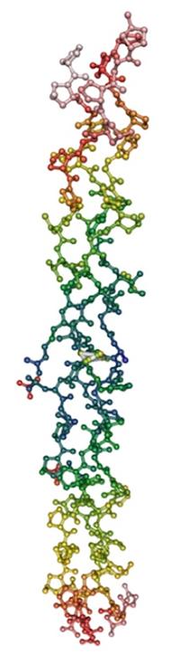 Humán kollagén molekula